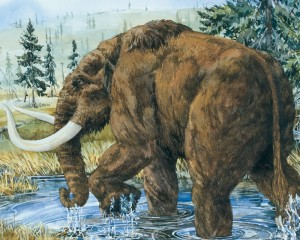 A mastodon moves through a northeastern post-glacial environment. Artwork by Judi Pennanen. Used with permission of the artist and the Geological Survey of Canada.