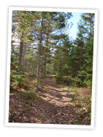 One view of the Mi'kmawey Debert Interpretive Trail. We will be celebrating the trail's 10th anniversary this coming October.