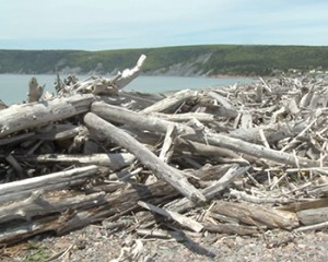 Due to the tides in the Bay of Fundy, wood from around the world accumulates at Driftwood Haven beach in Advocate Harbour.