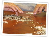 Detail of Vanessa Julian (Millbrook First Nation) cleaning quills as part of a cultural camp, Majukwatmuan Awti'j, held in various communities. Quillwork workshops are one example of the experiential programs planned for the Centre.